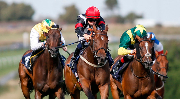 Coronation Day, with Harry Bentley up(red cap), on the way to winning The Harry Bloom Memorial Handicap Stakes at Brighton yesterday Photo :Alan Crowhurst/Getty Images