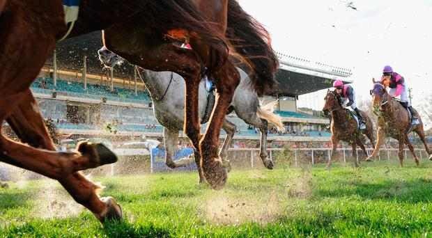 The Charles Byrnes runner is given preference, albeit a tentative one. Photo: Getty Images