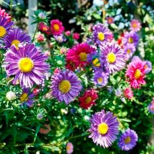 Daisies are part of the massive asters family, which has over 23,000 different species