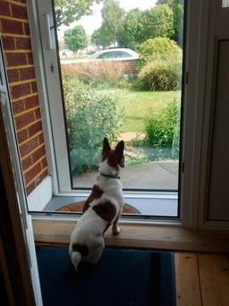 Zac, the Jack Russell