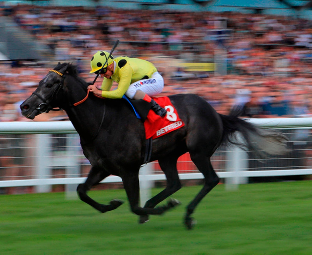 Defoe ridden by Andrea Atzeni on the way to winning The Betfred Geoffrey Freer Stakes at Newbury Racecourse yesterday. Photo: PA
