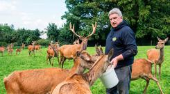 Making a buck: Pat Mulcahy with some of his deer on Ballinwillin House Farm near Mitchelstown, Co Cork Photo: O'Gorman Photography