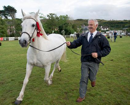 Noel Sweeney with Poise Melody Supreme Champion at the Connemara Pony Show in Clifden. Photo: Andrew Downes, xposure