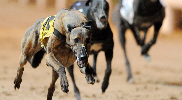 The focus will be on Sonic's kennel companion Clares Rocket (9.12) in Heat 12 of the BoyleSports Irish Derby second round. Stock picture: Sportsfile