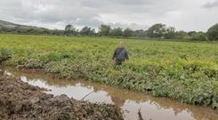 Seamus Lynch battled for days to save his potato crops that are worth €300,000. Photo: North West Newspix