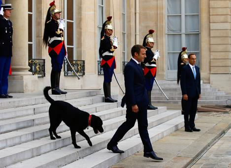 France's President Emmanuel Macron walks down the steps of the Elysee Palace, with his newly adopted dog, a labrador crossed griffon named Nemo, as he prepares to welcome the President of Niger Mahamadou Issoufou, in Paris, France, Monday, Aug. 28, 2017
