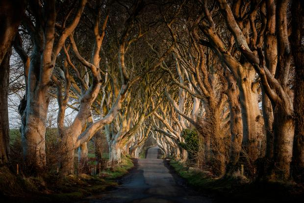25948_The Dark HedgesGame of Thrones - The Dark Hedges_The Kingsroad.jpg
