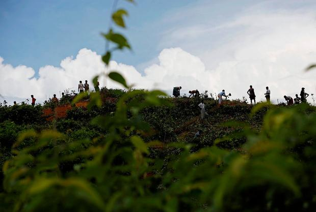 New Rohingya refugees clean bushes off of a hill to build makeshift shelters in Balukhali near Cox's Bazar, Bangladesh, September 2, 2017. REUTERS/Mohammad Ponir Hossain