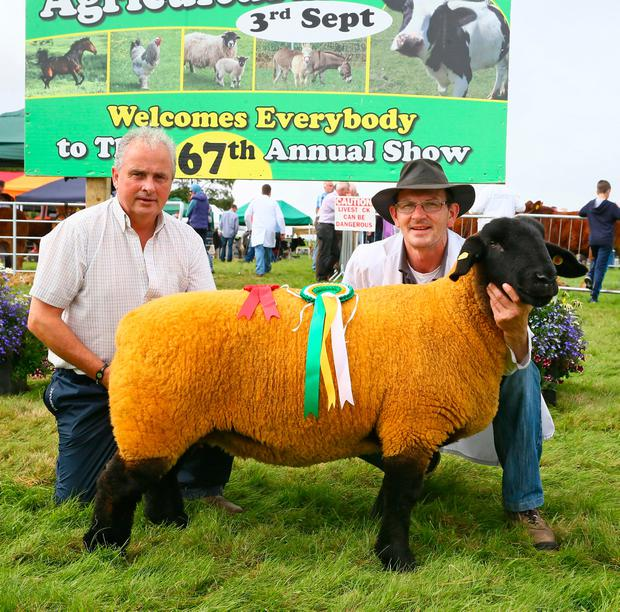 Frank Gibbons (judge) pictured with Kenneth Bailey, Lismurtagh, Tulsk, Castlerea, Co Roscommon with Champion Pedigree sheep at Ballinrobe 67th Agricultural Show. Photo: © Michael Donnelly