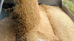 The grain market is struggling to reach last year's prices