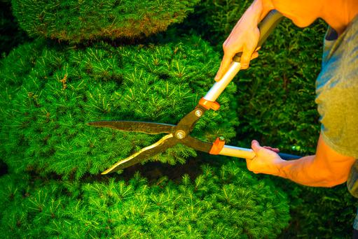Cutting now allows time for plants to harden off