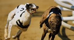 Clares Rocket is his main hope but he has major backing from Sonic and six other kennel companions. (Stock photo)