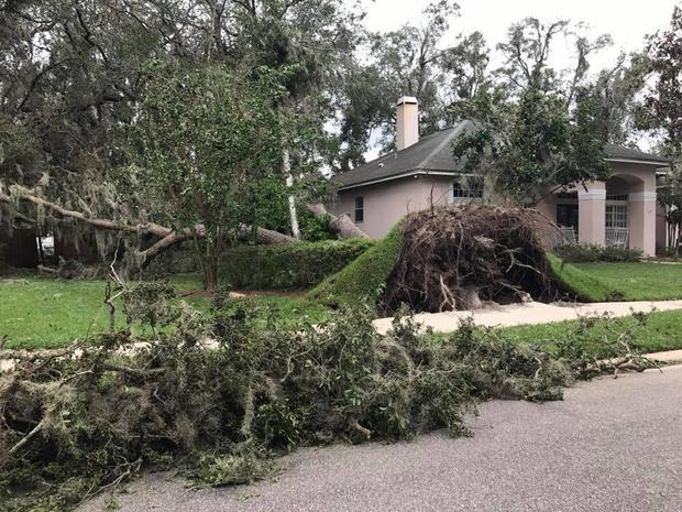 Trees uprooted in Orlando Photo: Celine Daly
