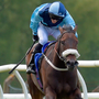 Final Venture can defy top weight at Doncaster today. Photo: Martin Lynch