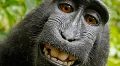 The row over ownership of the 'selfie' taken by endangered monkey Naruto has come to an end.