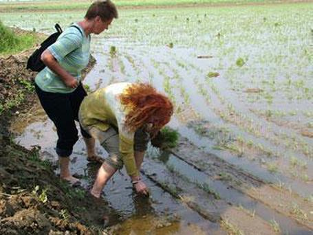 Tourists pictured on the North Korea tourism website planting rice in the famine stricken country DPR Korea Tour