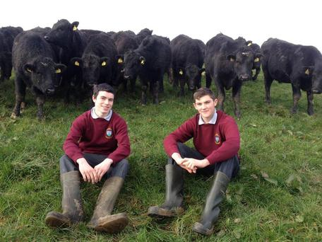 Mark Shorten and Conor Lehane students from Newcestown and Timoleague represented St Brogans College in the Certified Irish Angus Beef Schools Competition 2016 during transition year