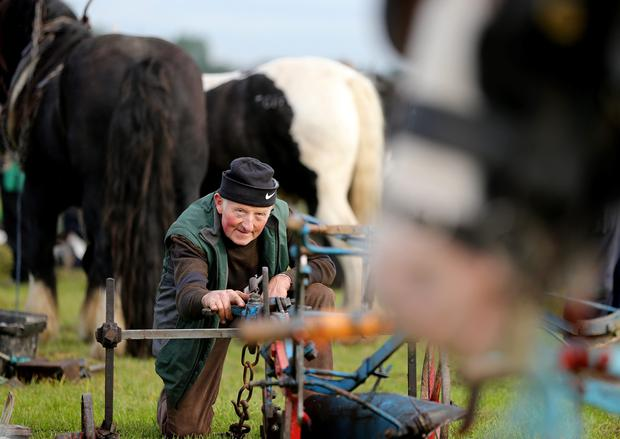 JJ Delaney prepares for competition in the senior horse plough section at the Ploughing. Picture; Gerry Mooney