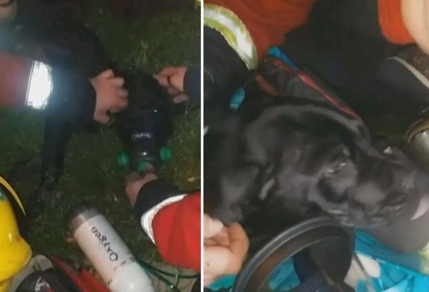 Moment black Labrador puppy licks firefighters after they resuscitate him