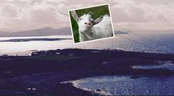 Arranmore Island and (inset) a goat