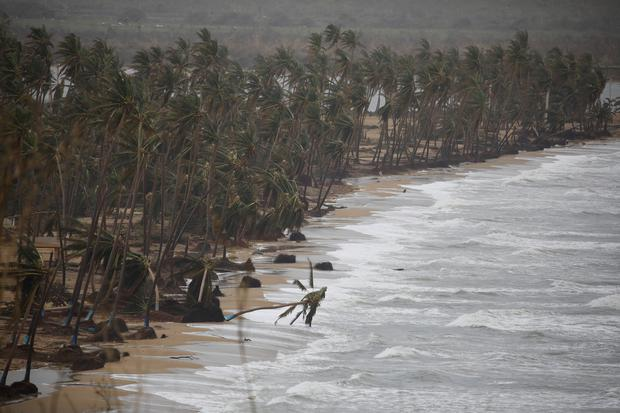 Broken palm trees are seen after the area was hit by Hurricane Maria in Yabucoa, Puerto Rico September 22, 2017. REUTERS/Carlos Garcia Rawlins