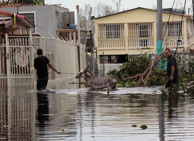 People wade through a flooded street with a donkey, after the area was hit by Hurricane Maria in Catano municipality, southwest of San Juan, Puerto Rico September 21, 2017. Picture taken September 21, 2017. REUTERS/Alvin Baez