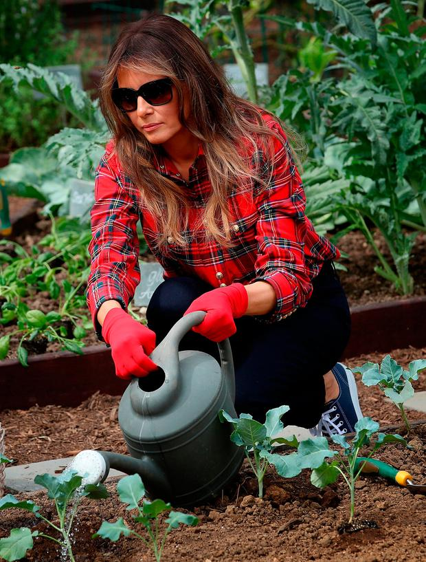 U.S. first lady Melania Trump joins children from the Boys and Girls Club of Washington in planting and harvesting vegetables in the White House Kitchen Garden September 22, 2017 in Washington, DC