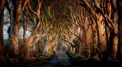 The Dark Hedges near Armoy, Co Antrim, a location made famous by Game of Thrones. Photo: Northern Ireland Tourist Board/PA Wire