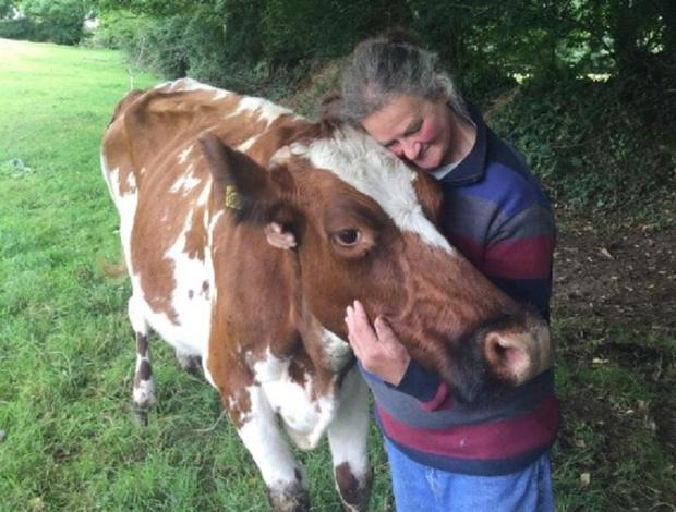 Farmer Jill Smith wanted to save her herd from slaughter Go Fund Me