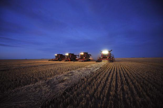 FILE PHOTO: Combines harvest wheat on the Stephen and Brian Vandervalk farm near Fort MacLeod, Alberta, Canada, September 26, 2011. REUTERS/Todd Korol/File Photo