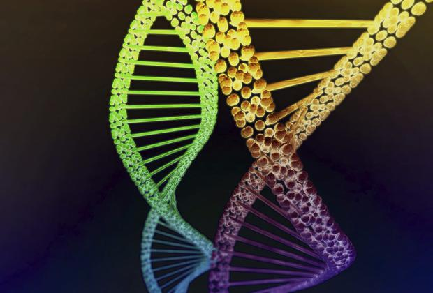 Scientists have coaxed the mutated DNA of human embryos back into healthy code in an experiment which could one day by used to cure a range of inherited diseases. Photo: Stock image
