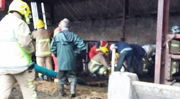 Fire crews were able to save the two cows stuck in the slurry tank