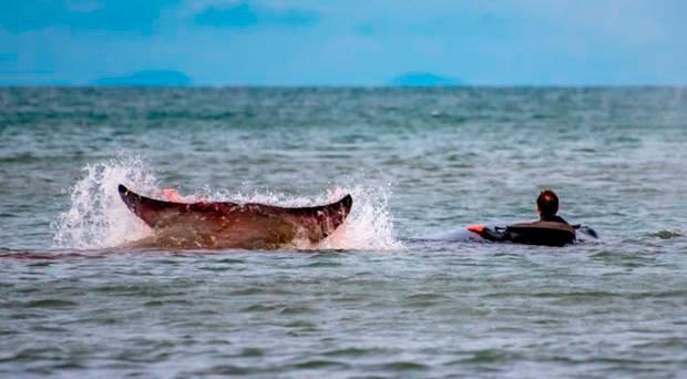 John coaxed whale back out to sea