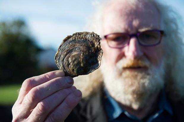 Gerry O'Halloran from New Quay, Co Clare, and member of Cuan Beo, holds an oyster at a 'Native Oyster Workshop' ahead of the Clarinbridge Oyster Festival. Photo: Andrew Downes/XPOSURE