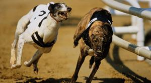The quarter-finals of the Dublin Coach Juvenile Derby take place at Shelbourne Park this evening. Photo: Stock Image