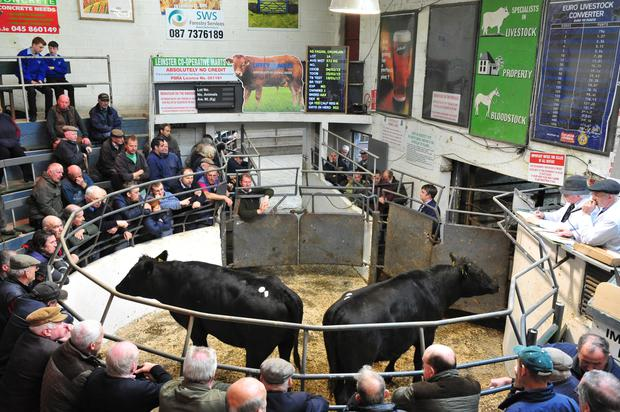 Lot No 1A. DOB 04/02/15.Breed AAX.Weight 572 kg. Price €1060. Photo Roger Jones.