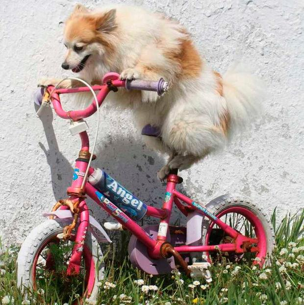 'Sparky' - Anne Cully-Ryan & Bill Ryan submitted this picture of their dog Sparky into Independent.ie's Ireland's Top Dog competition