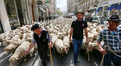 French farmers walk ahead of hundreds of sheep as they stage a protest against the government's