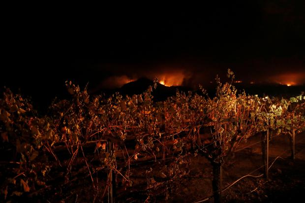 Vines are seen at a vineyard during the Nuns Fire in Kenwood, California, U.S., October 10, 2017. REUTERS/Stephen Lam