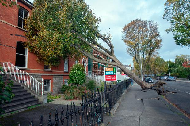 A fallen tree on Northbrook Road, Ranelagh, which was blown over during Storm Ophelia.