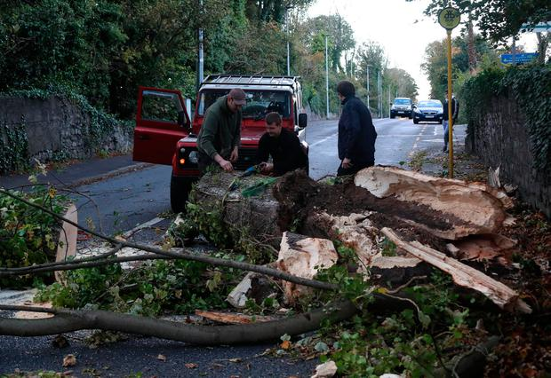 Locals cut up and clear a fallen tree which had been blocking the road for most of the day on the Leixlip Road, near the Salmon Leap Inn this evening after Hurricane Opelia