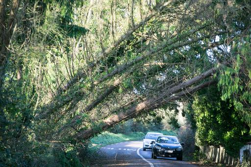 Cork was among the counties worst affected by Storm Ophelia (Picture: Mark Condren)