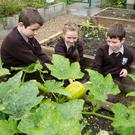 Scoil Íde fourth class pupils, Sam Long, Kristina Vitina and Jack Meaney, examine this year's crop of pumpkins prior to Halloween Picture: Liam Burke Press 22