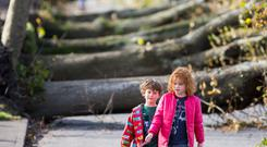 Elsa (7) and Tom (5) Dollard walk their dog on Centre Park Road in Cork after Hurricane Ophelia. Photo: Mark Condren