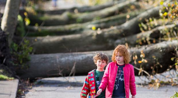 Fears that insurers will hike premiums as Storm Ophelia damage claims to hit €800m