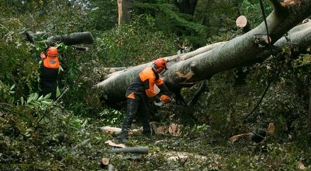 Members of the Irish Defence Forces clearing fallen trees at Burke's Hill in Cork. Photo: Mark Condren
