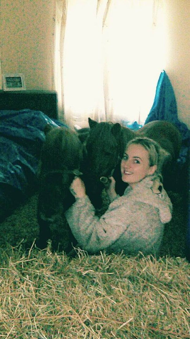 Amanda and her rescue Shetland ponies