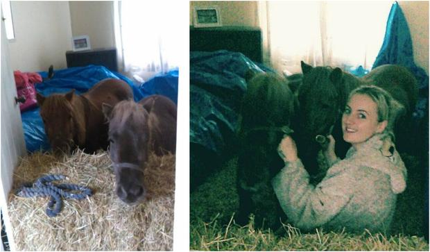 Amanda has been housing her two rescue Shetand ponies at home since Storm Ophelia tore the roof off their barn