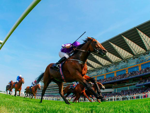 Highland Reel gets the nod at a decent price of 8/1. Photo: ©cranhamphoto.com