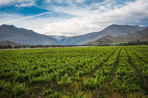 Chile is the most popular country of origin for Irish wine drinkers